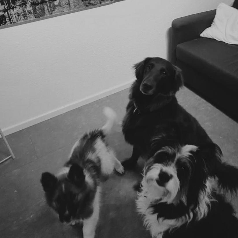 Fenna, Yoola und Anuya